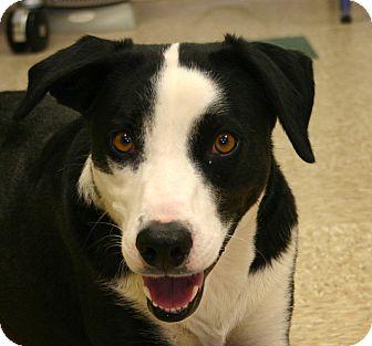 Border Collie Mix Dog for adoption in Hastings, Nebraska - Farrah
