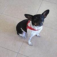 Adopt A Pet :: Sparky - Birmingham, AL