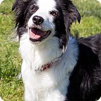 Adopt A Pet :: Wynn - Patterson, CA