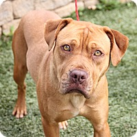 Adopt A Pet :: Leona - Greensboro, NC