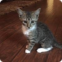 Adopt A Pet :: Camelot - Denver, CO