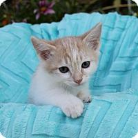 Adopt A Pet :: THEODORE - Newport Beach, CA