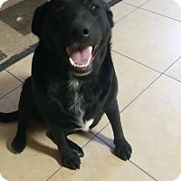 Adopt A Pet :: May - Las Vegas, NV