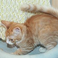 Adopt A Pet :: Mimosa - Santa Rosa, CA
