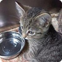 Adopt A Pet :: FLASH - Henderson, KY