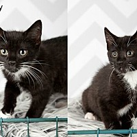 Adopt A Pet :: Johnny & Cash - Rochester, NY