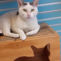 Adopt A Pet :: Jamie - Philadelphia, PA