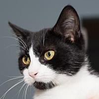 Adopt A Pet :: Becky - Philadelphia, PA