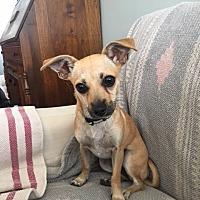 Adopt A Pet :: Flower - Long Beach, CA