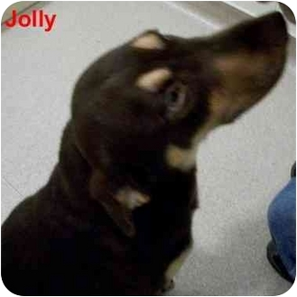 Shepherd (Unknown Type) Mix Dog for adoption in Slidell, Louisiana - Jolly