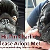 Adopt A Pet :: Charlie - Eagle, ID