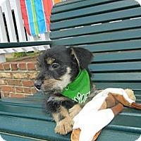Adopt A Pet :: Peyton - Crystal River, FL