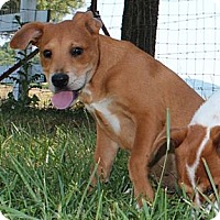 Adopt A Pet :: Janet--Reduced fee $300 - Hagerstown, MD