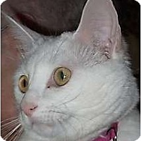 Adopt A Pet :: Pretty Girl - Andover, KS
