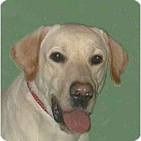 Adopt A Pet :: Caleb - New York, NY