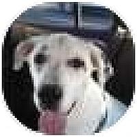 Adopt A Pet :: Monroe - Orlando, FL