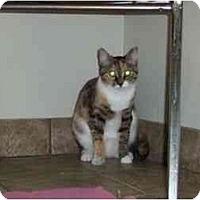Adopt A Pet :: Sandy - Secaucus, NJ