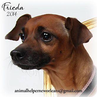 Dachshund/Chihuahua Mix Dog for adoption in New Orleans, Louisiana - Frida