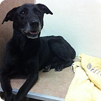 Adopt A Pet :: Starky - Coral Springs, FL