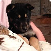 Adopt A Pet :: Jupiter - Saskatoon, SK