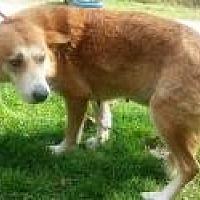 Adopt A Pet :: mama fluff - Prestonsburg, KY