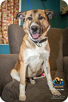German Shepherd Dog Mix Dog for adoption in Evansville, Indiana - Dagwood