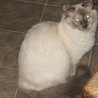 Adopt A Pet :: Laverne - Coos Bay, OR
