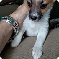 Adopt A Pet :: Iris - Simi Valley, CA