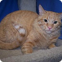 Adopt A Pet :: Prince Charming - Colorado Springs, CO