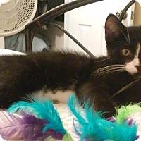 Adopt A Pet :: Bailey - Colmar, PA
