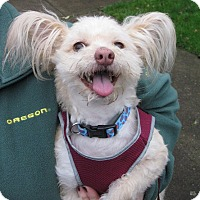 Adopt A Pet :: Dexter - Salem, OR