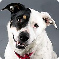 Adopt A Pet :: Lani - Columbia, IL