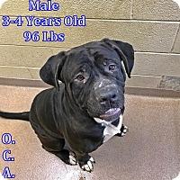 Adopt A Pet :: 1-4 - Triadelphia, WV
