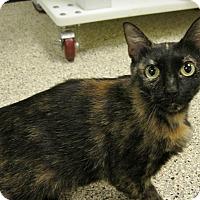 Adopt A Pet :: Diva - Georgetown, TX