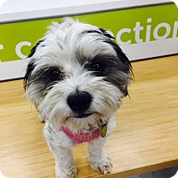 Adopt A Pet :: Emmy - Studio City, CA
