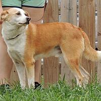 Adopt A Pet :: Ozzie - Joplin, MO
