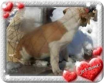 Border Collie/Hound (Unknown Type) Mix Puppy for adoption in Harrisonburg, Virginia - Gracie