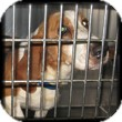 Basset Hound Dog for adoption in Marietta, Georgia - Chuckie