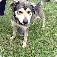 Adopt A Pet :: #442-13  @ Animal Shelter - Zanesville, OH