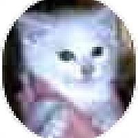 Adopt A Pet :: Casper - Solon, OH