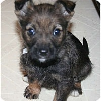 Adopt A Pet :: Coco - Westfield, IN