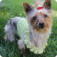 Adopt A Pet :: Dixie - Fort Mitchell, KY