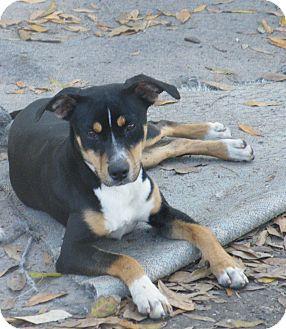 Hound (Unknown Type) Mix Dog for adoption in Okeechobee, Florida - Gracie