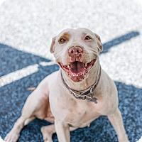 Adopt A Pet :: Maizey - Mission Viejo, CA
