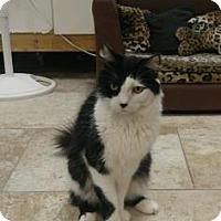 Adopt A Pet :: Renegade - Titusville, FL