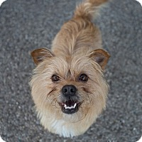 Adopt A Pet :: Ria - Drumbo, ON