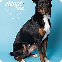 Adopt A Pet :: Verona - New Milford, CT