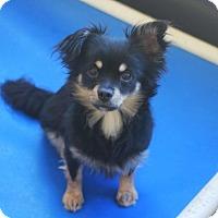 Adopt A Pet :: Elvis - Redwood City, CA