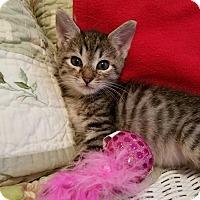 Adopt A Pet :: Petey - Duluth, GA