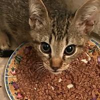 Adopt A Pet :: Kenji - La puente, CA